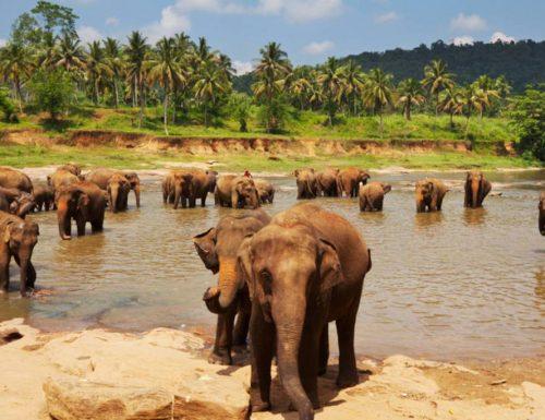 Cosa vedere nello Sri Lanka: documenti d'ingresso, mete e città da non perdere