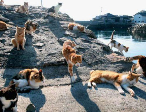 In Giappone c'è un'isola abitata (quasi) esclusivamente da gatti
